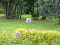 Moscow Botanical Garden of Academy of Sciences 111.JPG