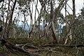 Mount Aggie, Brindabella Range, Namadgi National Park 03.jpg