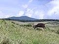 Mountain Deer at Riverstern.jpg