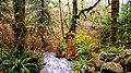 Munson Creek Falls (8237524405).jpg