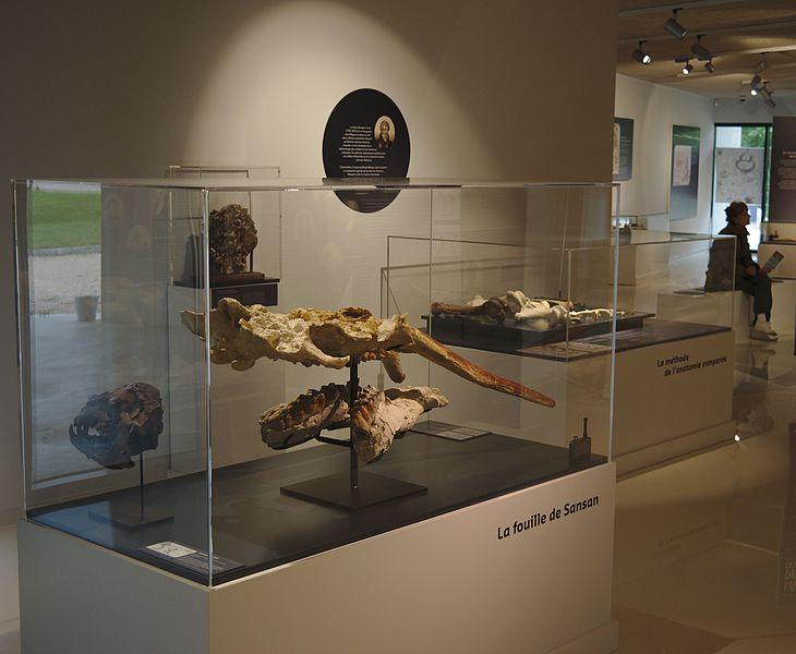 Musée-forum de l'Aurignacien
