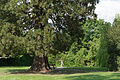 NDOÖ 029 Wilhering Mammutbaum Putto Mai 2014.jpg