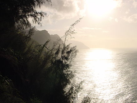 Despite their natural beauty, the secluded valleys along the Na Pali Coast in Hawaii are heavily modified by introduced invasive species such as She-oak. Na Pali Coast - Kauai.jpg