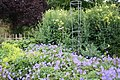 National Botanic Garden,Dublin,Ireland - panoramio (32).jpg
