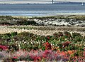 Natural garden at the foot of New York Harbor (4739738172).jpg