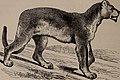 Natural history of animals; (1895) (14779408161).jpg