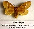 Naturkundliche Sammlung Übermaxx Überseemuseum Bremen 0003.JPG