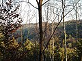 Naturpark Schönbuch in der Nähe von Waldenbuch - panoramio (1).jpg
