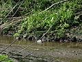 Naturschutzgebiet Heuckenlock 21.05.2014 Phase 82.JPG