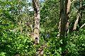 Naturschutzgebiet Mittleres Innerstetal mit Kanstein - Innerste bei Binder - Uferwald (4).JPG