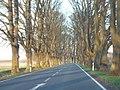 Naugartner Weg. Allee im Abendlicht. (Uckermark) - geo.hlipp.de - 9390.jpg