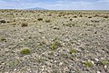 Near Tecolote Canyon - Flickr - aspidoscelis.jpg