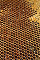 Newlands bees 019.JPG