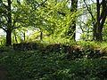 Niedersachsen, Goslar, LSG GS 00001, Ruinen auf dem Petersberg einschließlich Klusfelsen, überwucherte Mauerreste der Ruine vom St.-Peters-Stift, Südseite.JPG