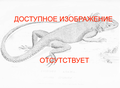 No image available lizard ru.png