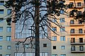 Novosibirsk State University.jpg