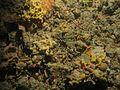 Nudibranchia WBRF CEND0313 LP08 STN 155 A1 031.jpg