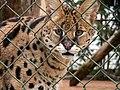Oaklawn Farm Zoo, May 16 2009 (3539746918).jpg