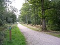 Off-road cycle route through the Busketts Lawn Inclosure, New Forest - geograph.org.uk - 51746.jpg