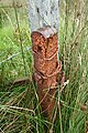 Old Fence Post. - geograph.org.uk - 558631.jpg