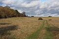 Open access land at Thetford Heath - geograph.org.uk - 1598762.jpg