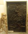 Orangutang & Ramapithecus 01.png