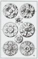 Orna115-Rosetten.png