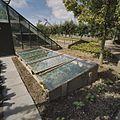 Overzicht enkele broeibak, met glas - Honselersdijk - 20405461 - RCE.jpg