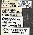 Oxyepoecus inquilinus casent0006160 label 1.jpg