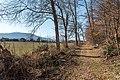 Pörtschach Winklern Quellweg Laubbäume am Wanderweg O-Ansicht 12012020 8029.jpg