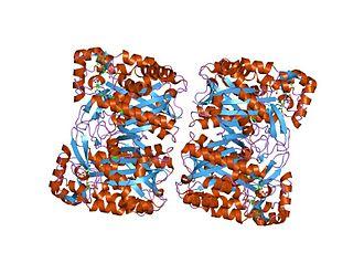Hydroxymethylglutaryl-CoA synthase - staphylococcus aureus 3-hydroxy-3-methylglutaryl-coa synthase
