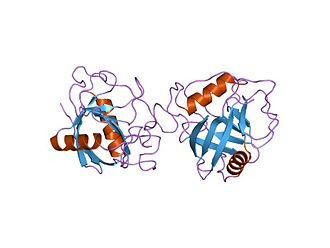Cyclophilin - x-ray structure of peptidyl-prolyl cis-trans isomerase a, ppia, rv0009, from mycobacterium tuberculosis.