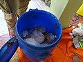 Packing of food stuffsWTK20150914-DSC00051.jpg