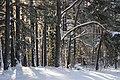 Padures meži - panoramio (2).jpg