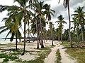 Palm trees at Mitsamiouli beach.jpg