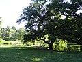 Parco Sempione, Milan, Italy (9474096450).jpg