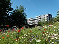 Park Place from Stevenage Town Centre Gardens.jpg