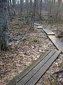 Parker Woodland planks 2.jpg