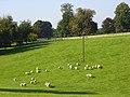 Parkland, Chilton Foliat - geograph.org.uk - 987843.jpg