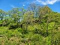 Parque Natural de Montesinho Porto Furado trail (5733154148).jpg