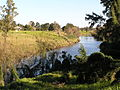 Paterson River from Tucker Park.jpg