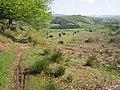 Path above Machynlleth - geograph.org.uk - 1358579.jpg