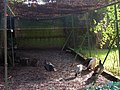 Peacocks, Nash Street Farm - geograph.org.uk - 267409.jpg