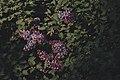 PermaLiv syrin 06-06-21.jpg