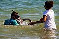 Pesquisadores do Projeto Tamar capturam uma tartaruga na Baía do Sueste, Fernando de Noronha.jpg