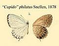 PhilatusSnellen1878.JPG