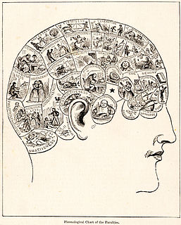 Phrenology study of human characteristics according to shape of the skull
