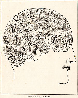 Phrenology diagram. From People's Cyclopedia o...