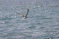 PikiWiki Israel 14724 Seagull.jpg