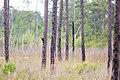Pileated woodpecker (40720863095).jpg